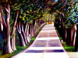 Camino de eucaliptos