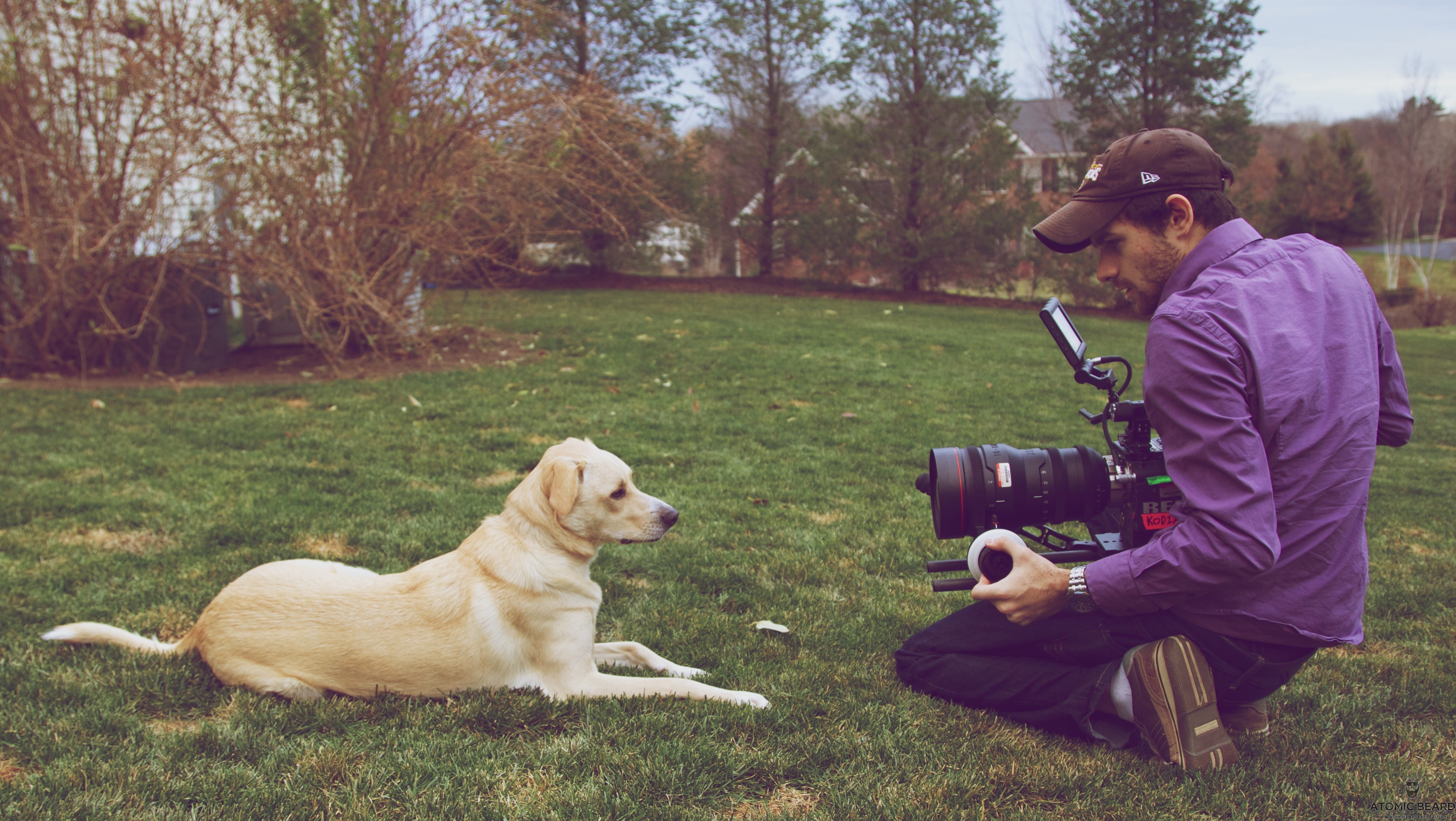 Potcake: A Dogumentary Set