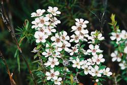 Davey River Wildflowers