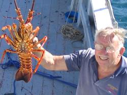 2kg Babel Island Crayfish