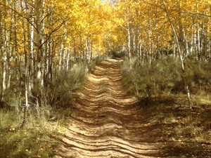 HIKE THE RED FEATHER LAKES TRAILS
