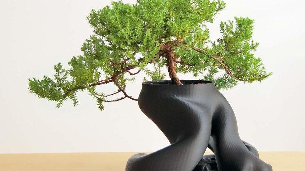 Abstract Planting Pot