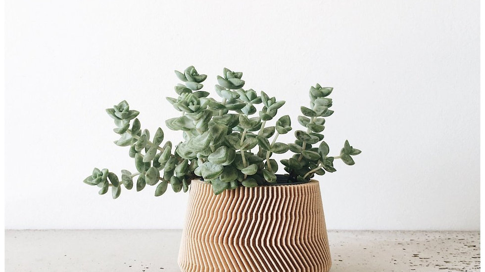 Minimalistic Planting Pot
