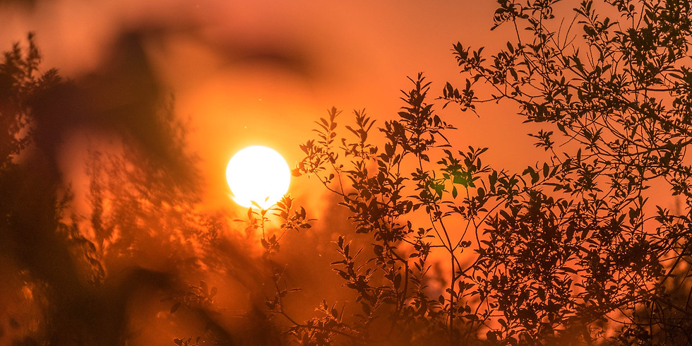 'Au fil des saisons, Yoga & Ayurveda', MATINEE YOGA & DIGESTION