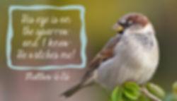 Sparrow-print-7x4.jpg