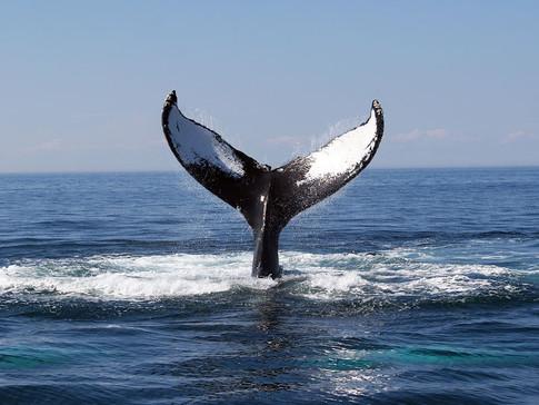 whale-watching-san-diego (1).jpg