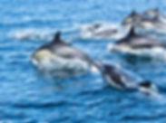 dolphins_san_diego2.jpg