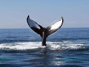 whale-watching-san-diego.jpg