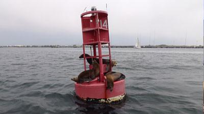 sea_lions_buoy_san_diego.jpg