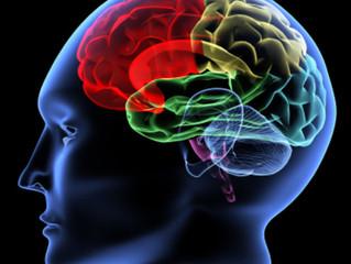 Un cerveau en bonne Santé
