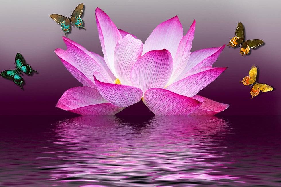 lotus_butterfly.jpg