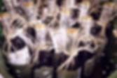 wedding planner madrid, organización bodas madrid, bodas madrid, wedding planner segovia, wedding planner boadilla, wedding planner majadahonda, decoración bodas, organización bodas, organizar tu boda, como preparar una boda, pasos para organizar una boda, como organizar mi boda