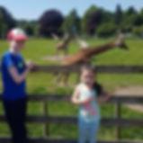 Blair Drummond Giraffe.jpg