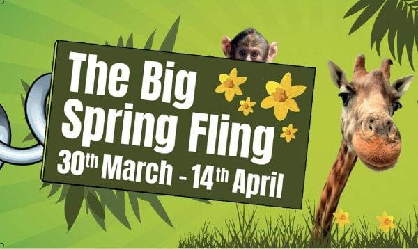 big spring fling.jpg