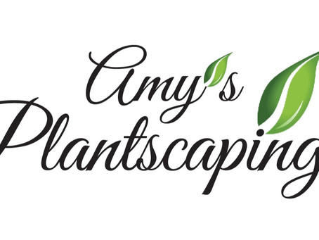 Introducing Amy's Plantscaping
