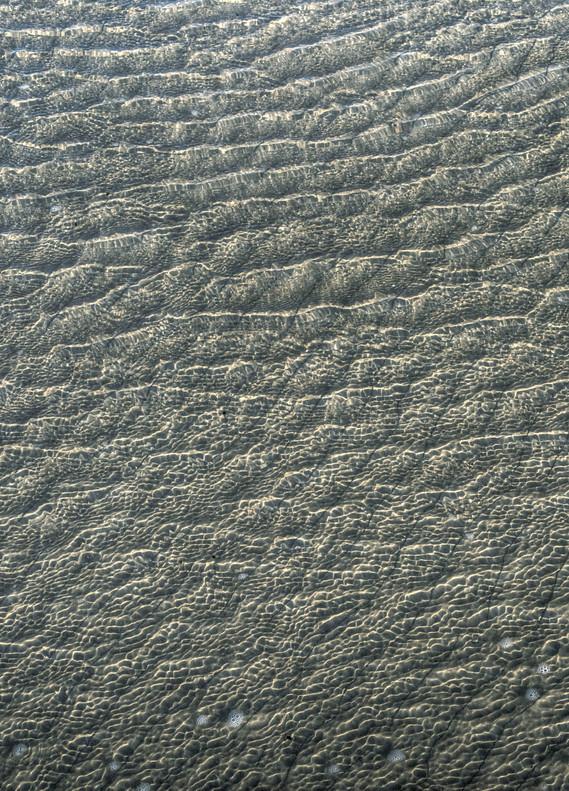 Elephant Skin II