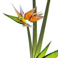 Birds of Paradise, 2021