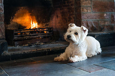 West Highland Terrier next to open fire