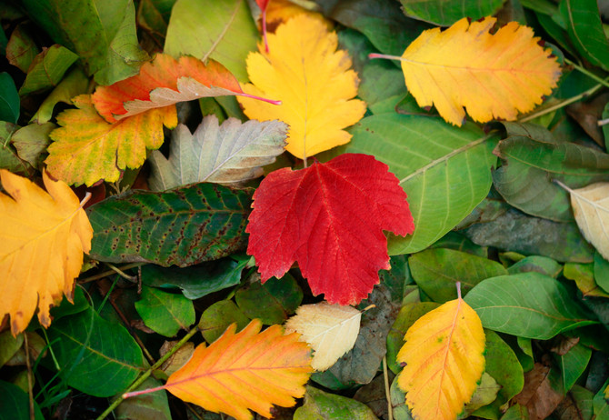 It's autumn already! Here's all of the latest from the Red Lion, Earlston