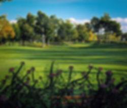 Pinegrove 1.jpg