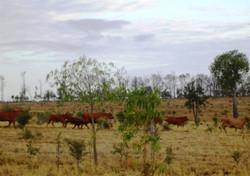 Fenceline - Cattle Creek