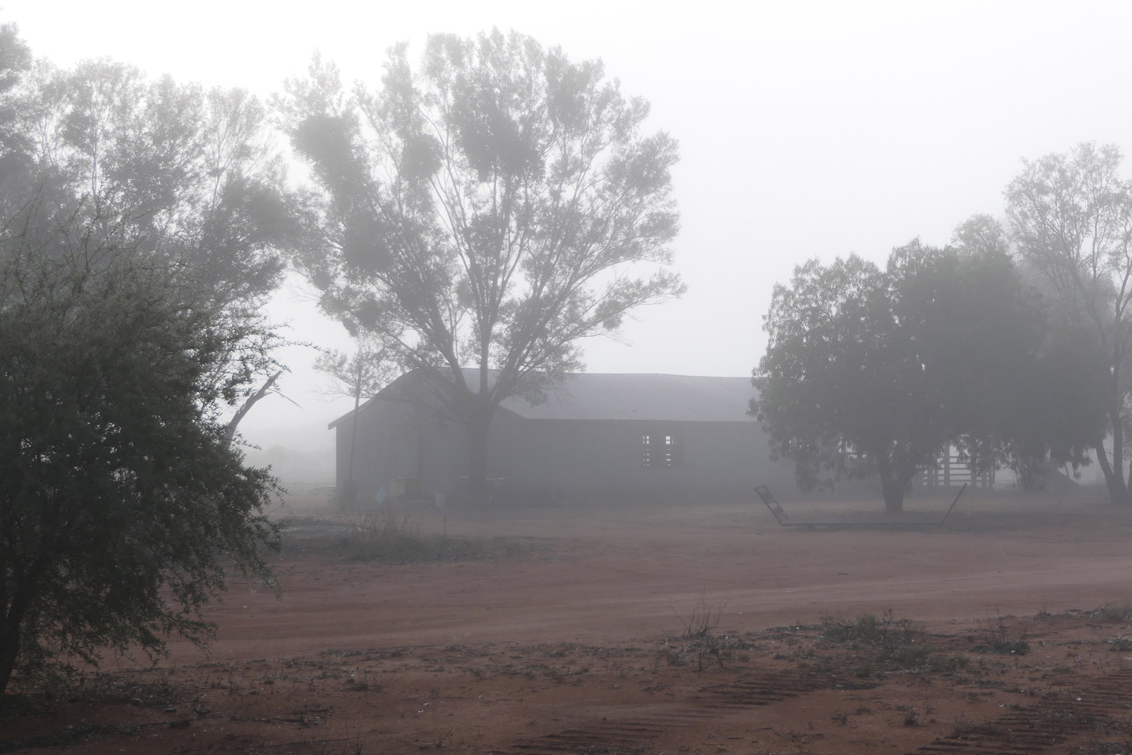 shearing shed in morning mist thurlby station
