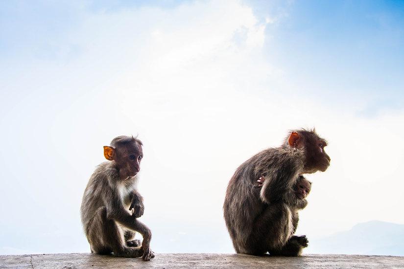 Mini Monkeys - Free Amigurumi Pattern