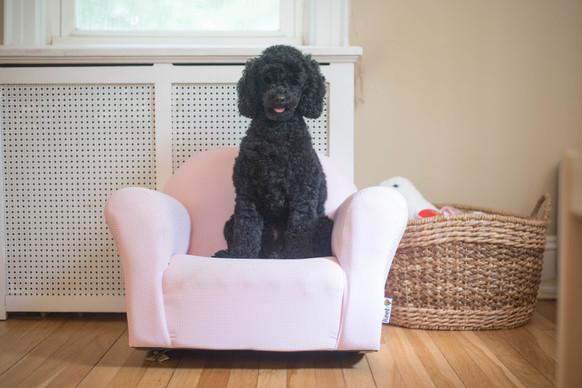 Molly Lola's Chair 5-1.jpg