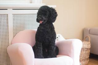 Molly Lola's Chair 2-1.jpg