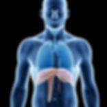 i44689-diaphragme.jpg