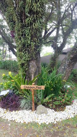 تزيين الحدائق