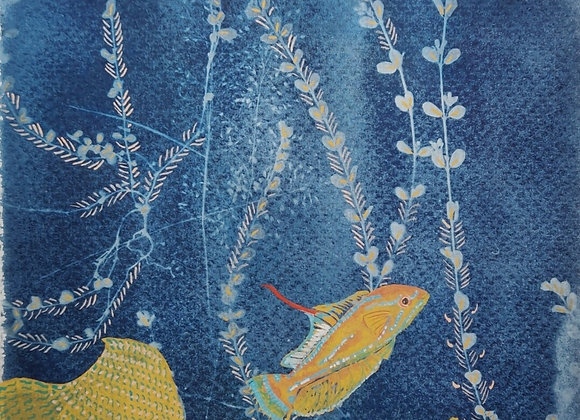 Yellofin flasher wrasse gouache Art Print