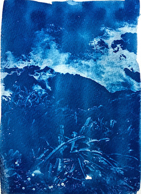 Cyanotype Photograph
