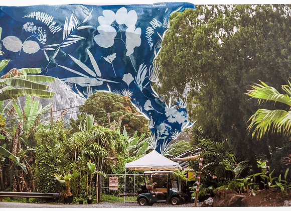 Large Orchid farm