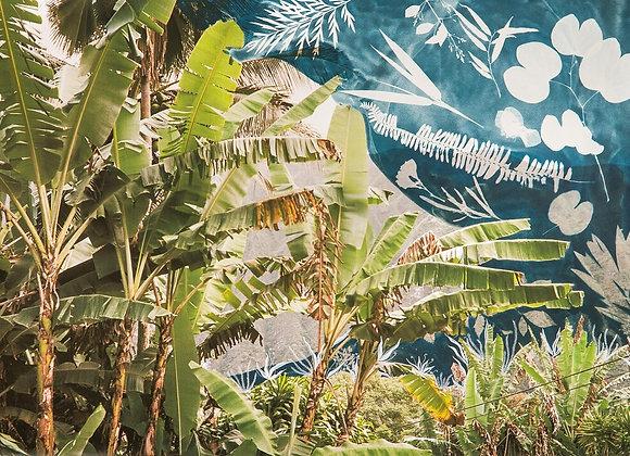 Waimanalo Palms cyanotype