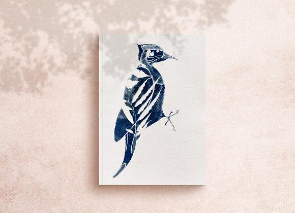 Lesser yellow naped woodpecker cyanotype