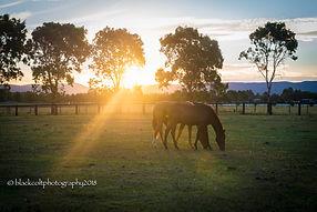 boys sunset.jpg