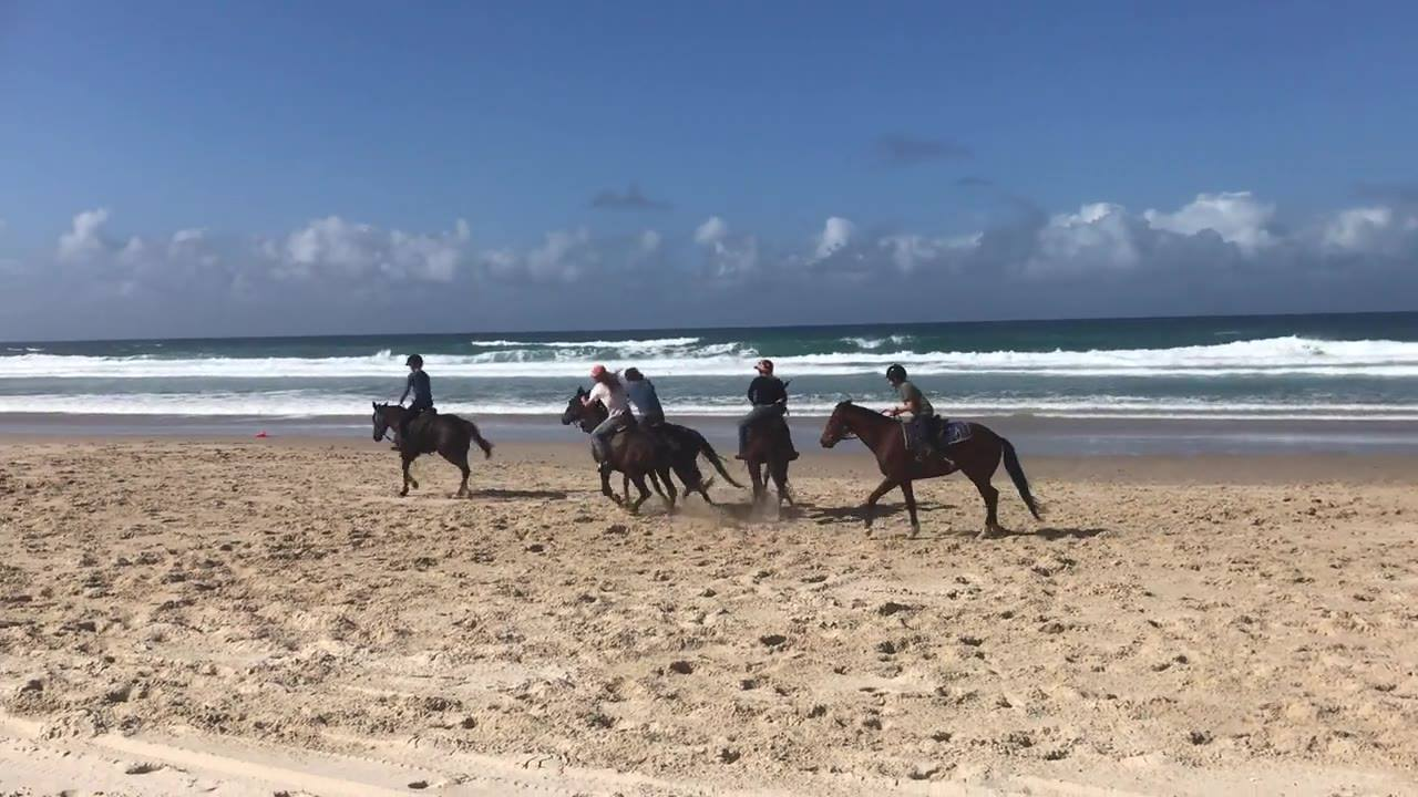 Surfing Cowboys Horse Olympics... our international riders playing catch the flag on our young horses. This fun game enhances the young horses agility, balance, confidence and fitness.  #itsnotwhatyourideitshowyourideit #surfingcowboyspolo #horseolym