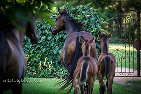 rocco siroco foals & gates.jpg