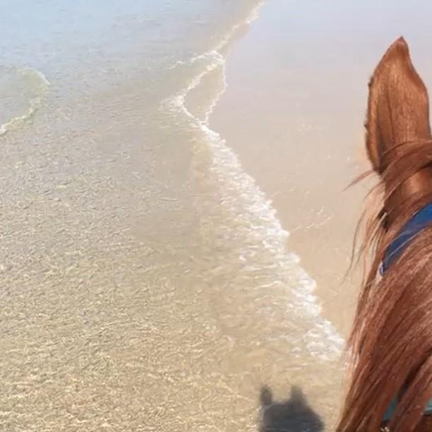 BEACH BABY   Living the life, our racing star BEACH BABY is back on Sugar Beach enjoying a few days rest following his run yesterday @ Ipswich. He ran an epic race coming in 2nd over 1350m in the Ipswich Carlton Mid Maiden Race.  #racing #surfingcowb