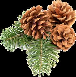 pngkey.com-pine-png-958238.png