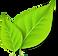 Starhill-Logo-2.png