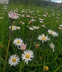 """Das Foto """"Schöne Natur"""" zeigt die Blumenwiese im Garten meiner Oma, das Foto """"Umweltsünden"""" zeigt die Bahnunterführung Hauptstraße in Neusäß"""