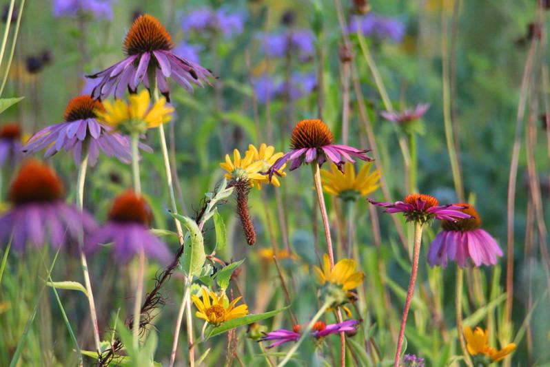 L3 - Paul Wightman Open Wetland s.jpg