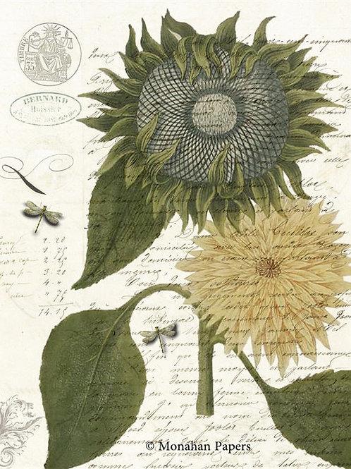 Botanical 66