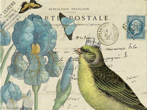 Yellow Bird Blue Iris SPS989