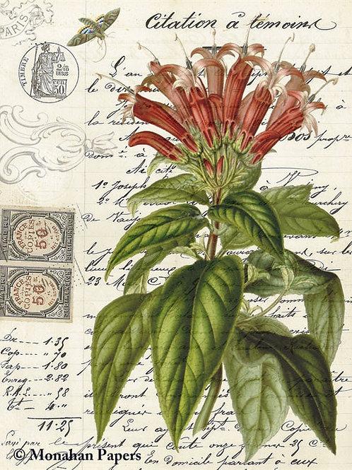 Botanical 78