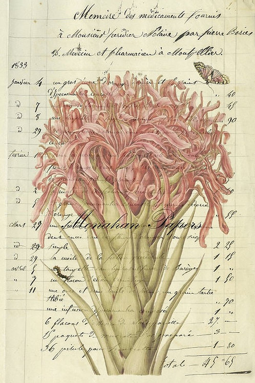 BOT 37 Pink Flower