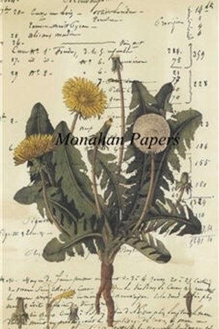 Botanical #9