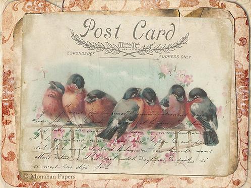 Red Damask Bird Gathering